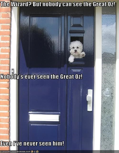 bichon frise,door,see,wizard of oz