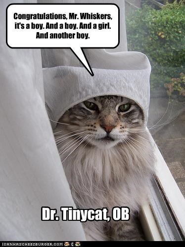 Dr. Tinycat, OB Congratulations, Mr. Whiskers, it's a boy. And a boy. And a girl. And another boy.