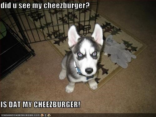 Cheezburger Image 2613496576