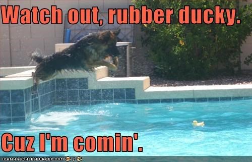 dive,german shepherd,pool,pool toy,rubber duck,swimming
