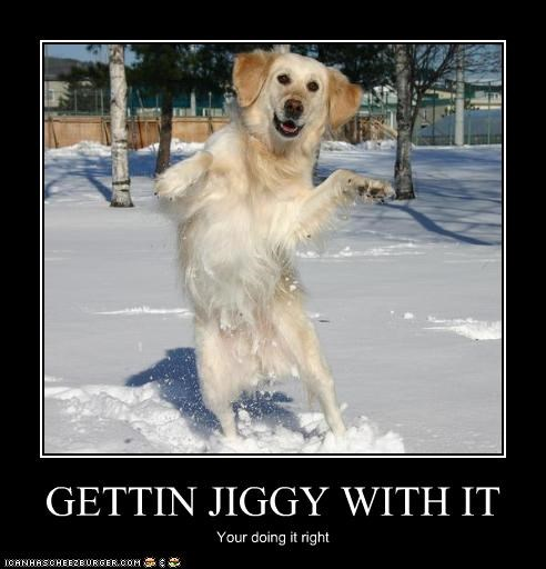 dancing doin it rite doing it right gettin jiggy golden retriever - 2616027648