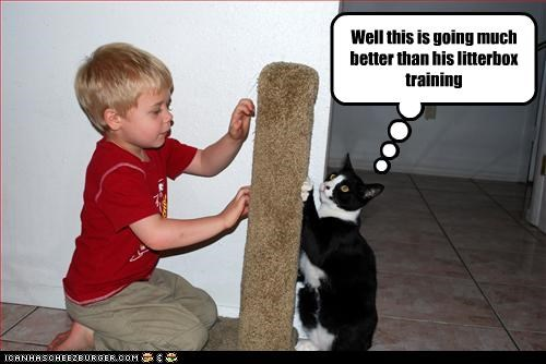 baby,helping,scratching posts,training