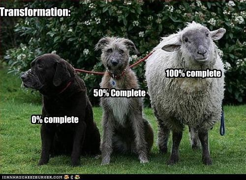 complete,labrador,percentage,sheep,transformation