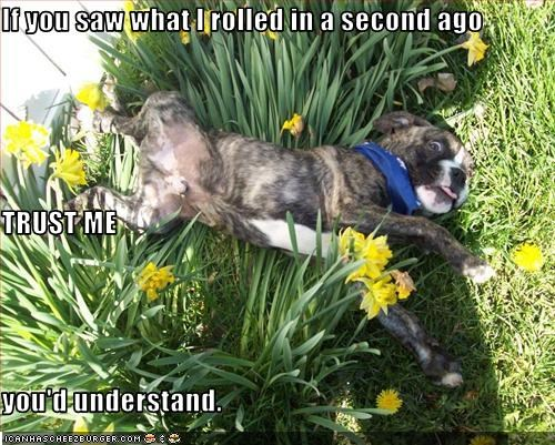 boxer,flowers,rolling,trust,understand