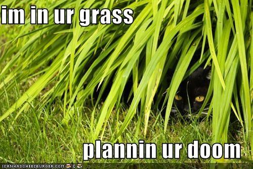 basement cat evil plotting threats - 2618937088
