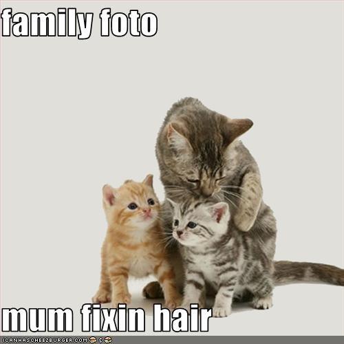 cute helping kitten momcat - 2619556608