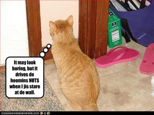 annoying Staring - 2620303872