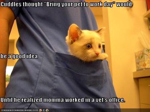 do not want kitten vet work - 2620579328