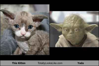 animals Cats kitten star wars yoda - 2621364480
