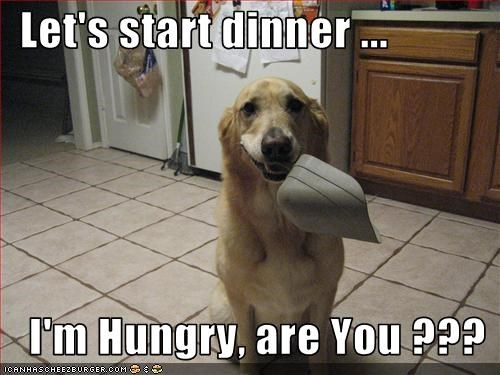 Cheezburger Image 2621437696