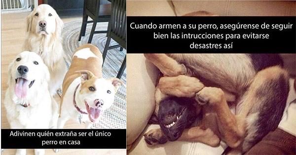 diversion con perros