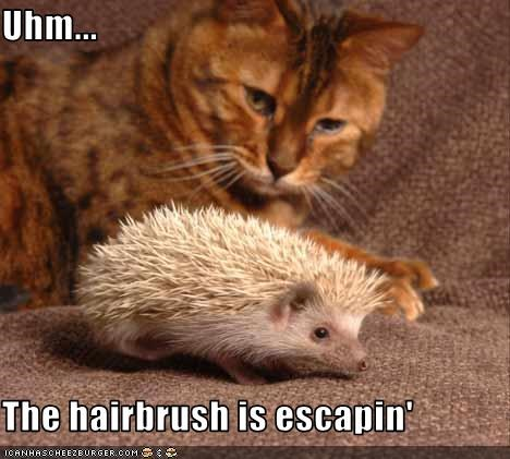 brush confused escaping lolhedgehogs