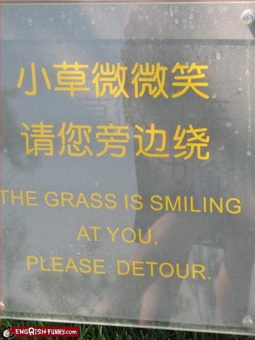 DETOUR, I SAID! The grass is smiling at you, please detour