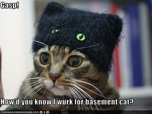 basement cat,costume,evil,hat,work