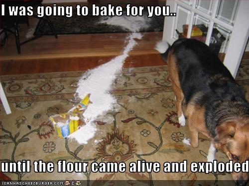 australian shepherd bake cook explosion flour mess - 2624647680