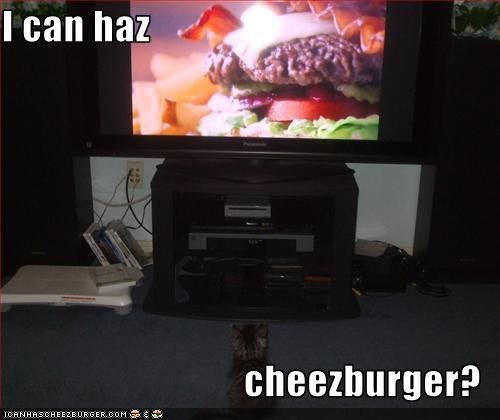 Cheezburger Image 2624715520