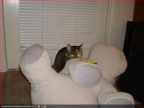 Cheezburger Image 2626353408