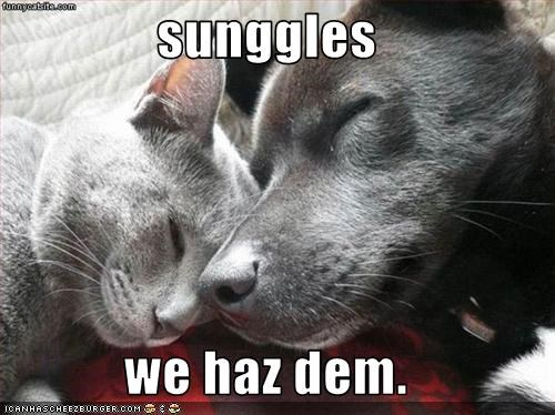 sunggles  we haz dem.