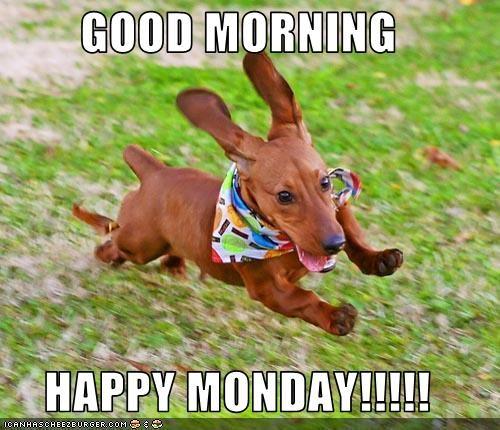 Good Morning Happy Monday Cheezburger Funny Memes Funny