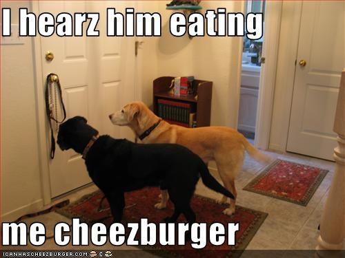 Cheezburger Image 2628743424