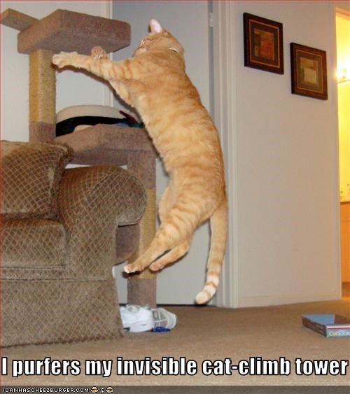 I purfers my invisible cat-climb tower