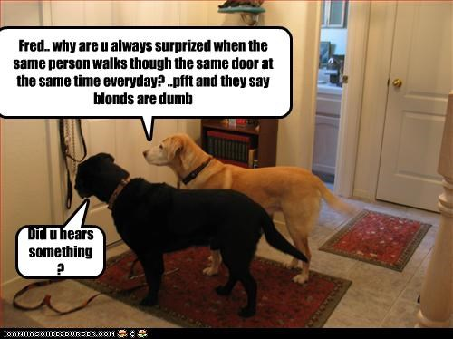 Did u hears something? Fred.. why are u always surprized when the same person walks though the same door at the same time everyday? ..pfft and they say blonds are dumb