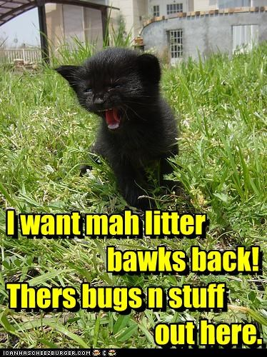 I want mah litter                       bawks back! Thers bugs n stuff                               out here.