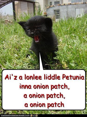 Ai'z a lonlee liddle Petunia inna onion patch, a onion patch, a onion patch