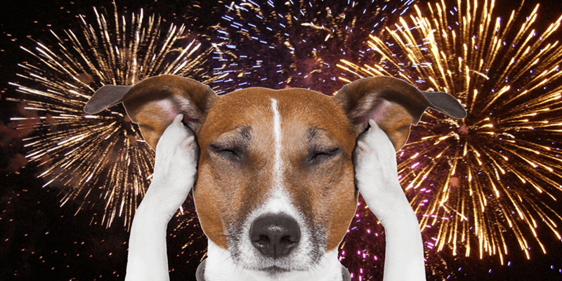 tips to help you calm your dog during 4th of July fireworks - Pic of dog covering his ears with his paws as fireworks rage behind him.