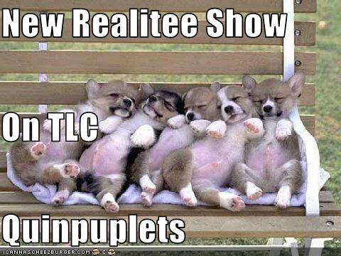 Cheezburger Image 2630108672