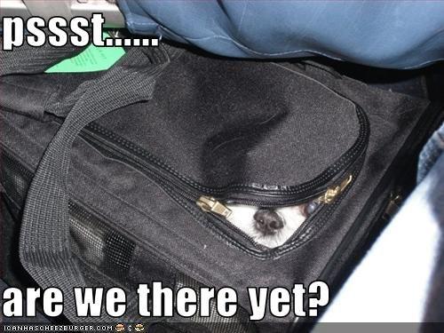 havanese hiding luggage suitcase - 2632221184