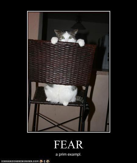 FEAR a prim exampl.