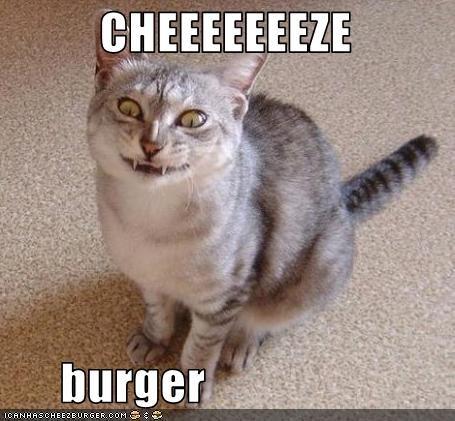 Cheezburger Image 2632624896
