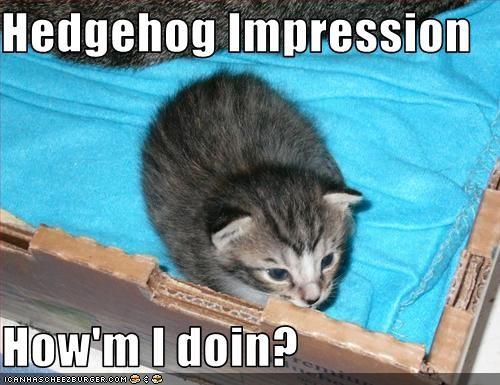 Cheezburger Image 2633853696