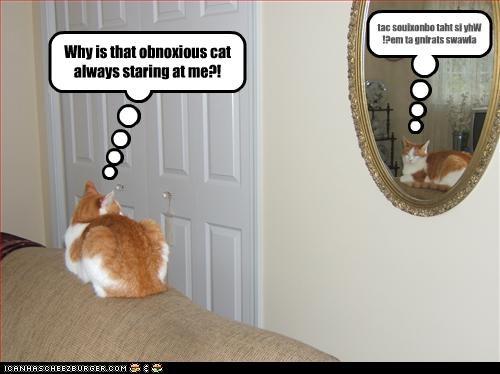 mirror Staring - 2634040832
