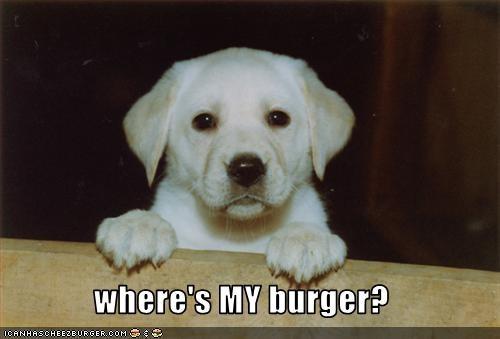 Cheezburger Image 2634622720