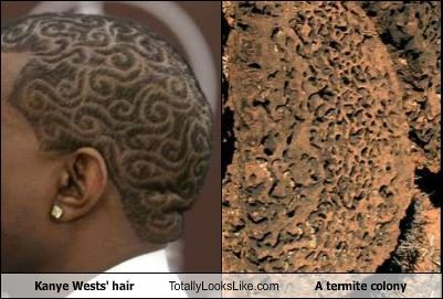hair style,kanye west,rappers,termite colony