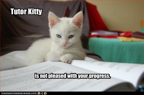 angry cute helping kitten school work - 2635097088
