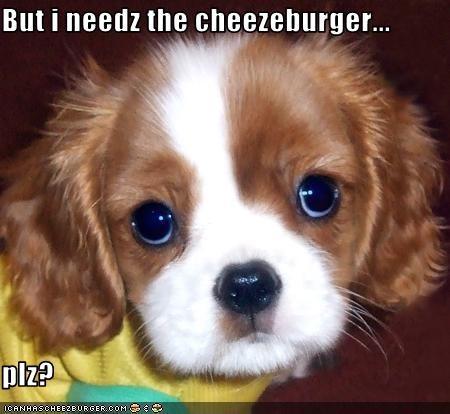 Cheezburger Image 2635164928