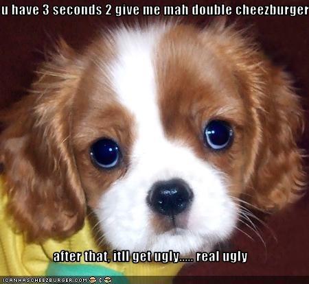 Cheezburger Image 2635324928