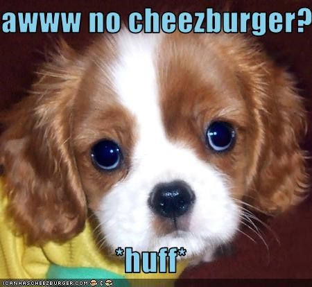 Cheezburger Image 2635428864