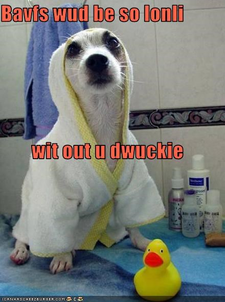 bath,bathrobe,bathroom,chihuahua,rubber duck