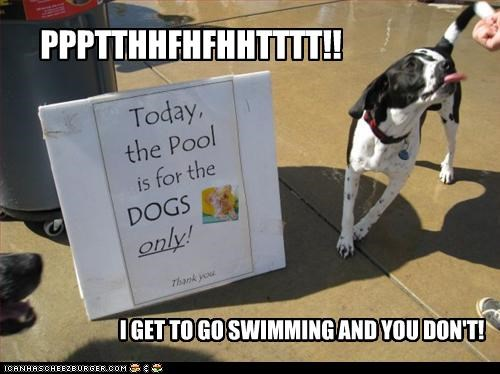 bragging only swimming whatbreed - 2636353024