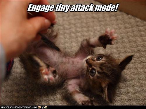 attacking cute fierce kitten - 2636876800