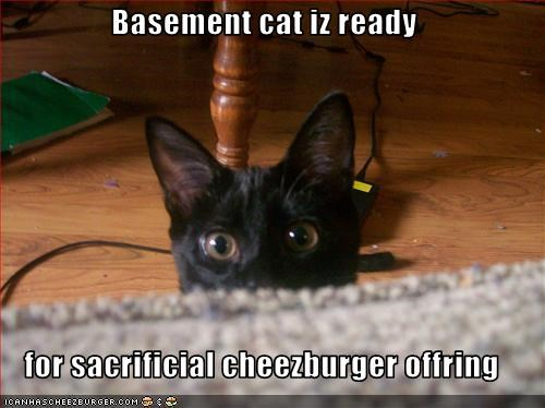 Basement cat iz ready  for sacrificial cheezburger offring