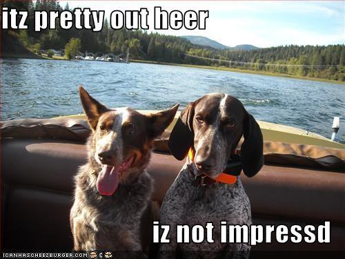 Cheezburger Image 2637700608