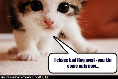 cute fierce helping kitten - 2637734912
