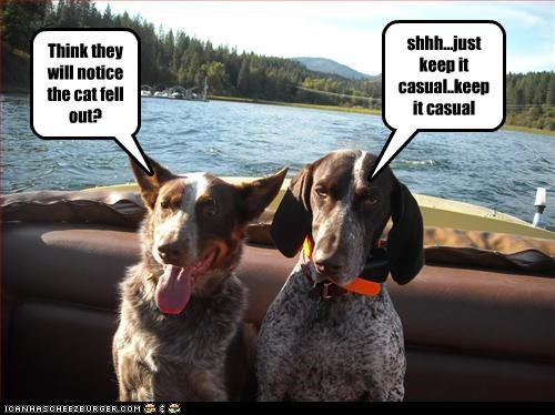 australian cattle dog,blue heeler,boat,fell,lolcats,out,pointer