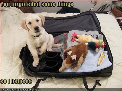 labrador luggage packing puppy suitcase toys
