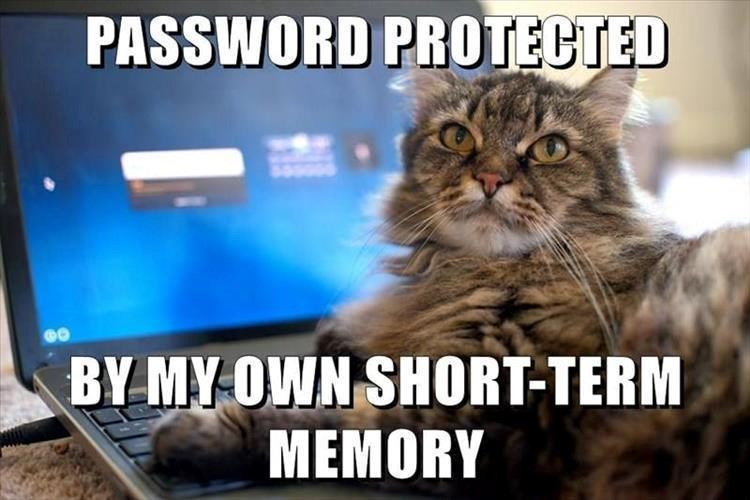 monday memes - meme of a cat that is locked out of the computer blaming its short term memory - cover for a list of funny memes for this Monday